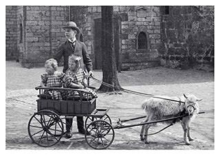 Fahren im Ziegenwagen