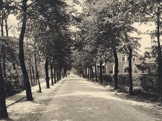 Lindenalleen